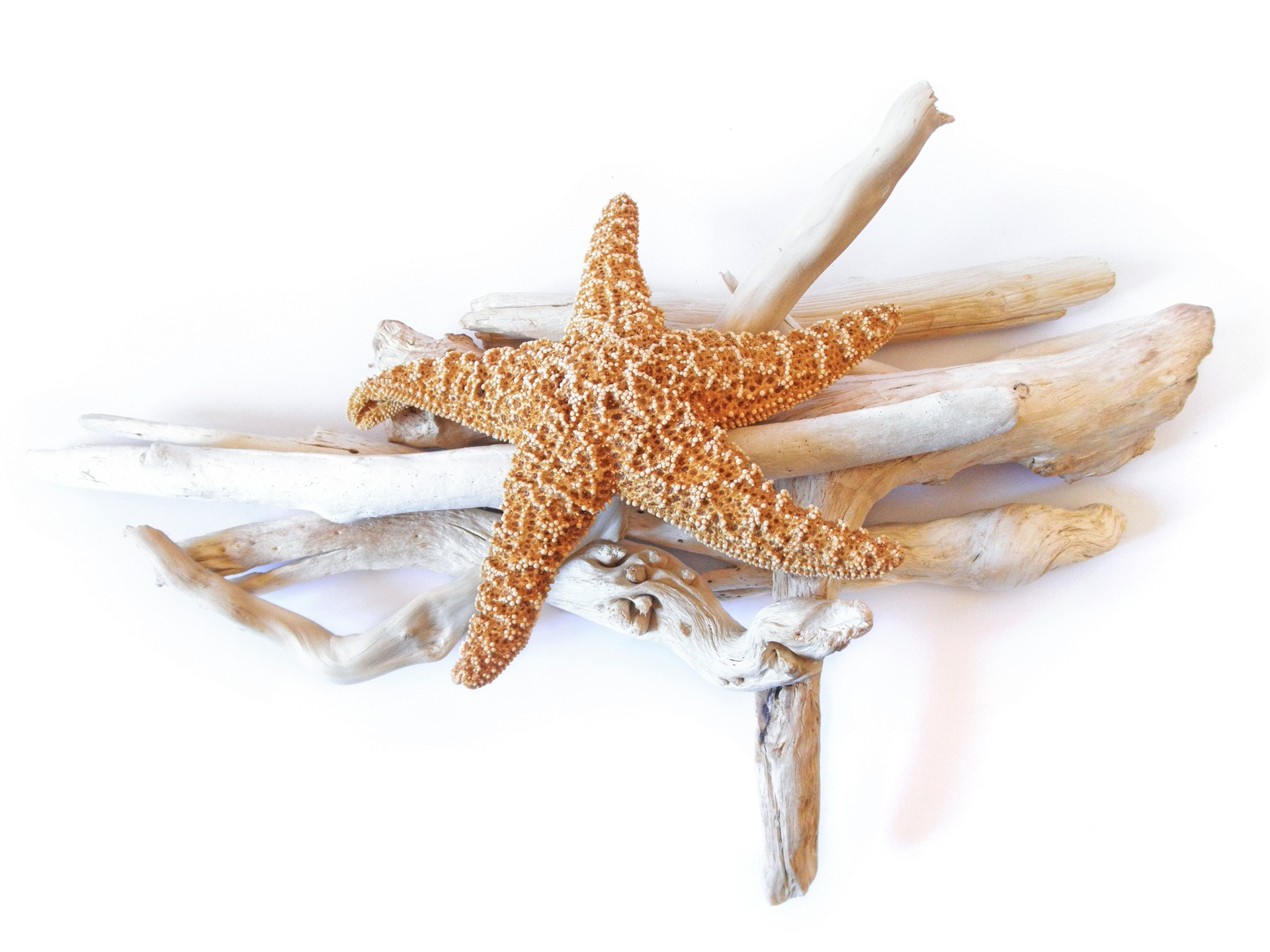 Starfish and Driftwood - My Favourite Beach