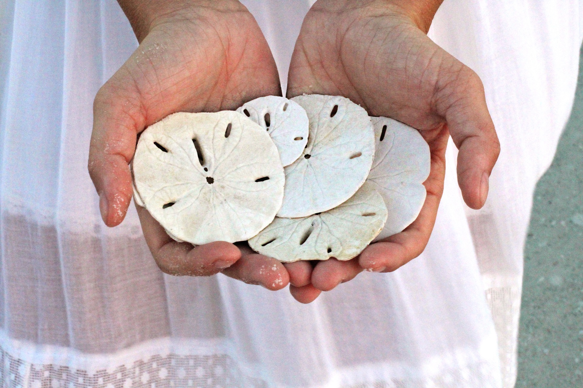 Find a Sand Dollar - Favourite Beach